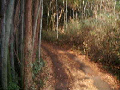 山村での竹林問題。竹の生長は他の木々よりも早く、しかも一度竹林が構築されると他の植物が生えにくくなってしまうので大変だとか。