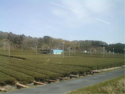 茶畑ー。俺の中では、お茶といえば埼玉なんだけど、世間一般的な意見では、お茶といえば静岡。世間一般的な意見では、埼玉は何にもねーよwwww