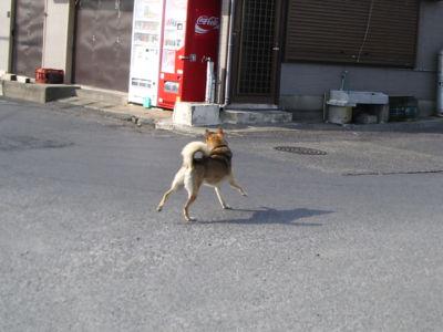 犬が走り回ってました。田舎だから許されるんですよね。