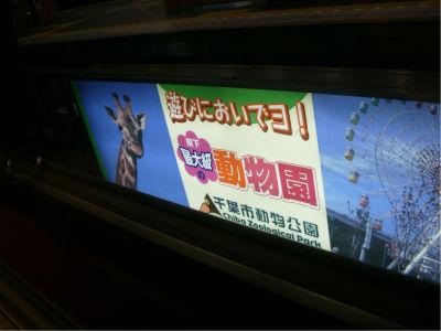 旭山動物園効果で、ここも盛り上がっていることを期待したい。あと、誰かに聞きたいんだけど、千葉県の動物園ってここ以外にどこがあるの?