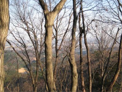 眺めがもう少し良ければ、ハイキングコースとして整備しても良さそうな感じ。